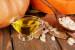 Kohlenhydratearme und gesunde Ernährung mit Kürbiskernöl
